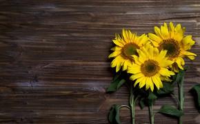 Picture sunflowers, Board, trio