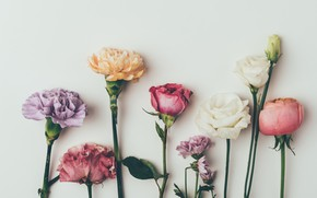 Picture flowers, background, roses, colorful, vintage, pink, flowers, background, roses, violet, clove