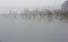 Picture winter, nature, fog, lake, reed