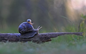 Picture TREE, TRUNK, SHELL, SNAIL