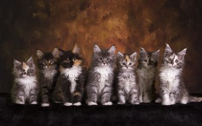 Picture look, cats, pose, the dark background, kitty, kittens, fur, kids, company, friends, cuties, a lot, …