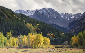 Picture field, autumn, forest, the sky, clouds, snow, trees, mountains, overcast, rocks, the slopes, tops, yellow, …