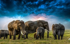 Picture grass, clouds, lightning, elephants, Heron, elephants