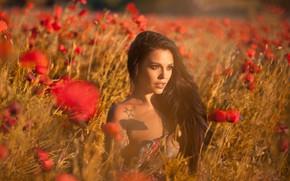 Picture field, look, girl, flowers, nature, Maki, brunette, tattoo, shoulder, curls, Anna Rawka
