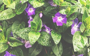 Picture drops, flowers, treatment