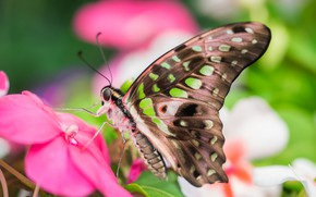 Picture butterfly, wings, insect