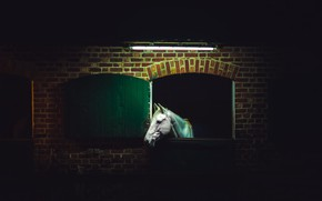 Picture night, horse, stall