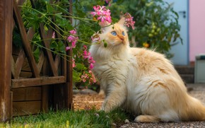 Picture cat, summer, cat, look, face, flowers, pose, garden, red, wicket