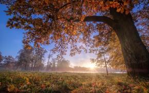 Wallpaper autumn, trees, fog, Park, Russia, oak, Pushkin, Tsarskoye Selo