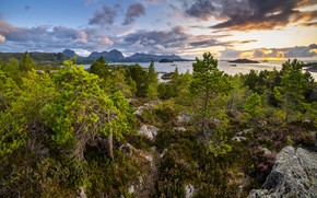 Picture trees, landscape, mountains, nature, stones, the ocean, vegetation, Norway