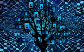 Picture tree, network, management, web