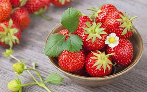 Picture flower, berries, strawberry