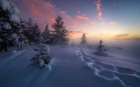 Picture winter, snow, trees, traces, Norway, the snow, Norway, RINGERIKE, Ringerike