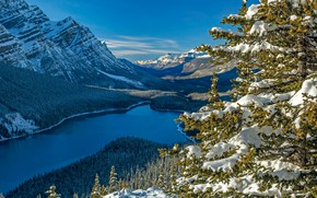 Picture forest, snow, mountains, lake, spruce, Canada, Albert, Banff National Park, Alberta, Canada, Rocky mountains, Banff …