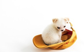 Picture background, baby, puppy, cap