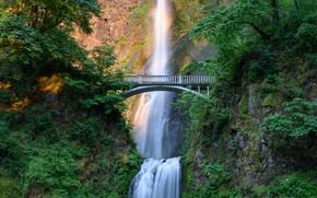 Picture greens, summer, light, mountains, branches, bridge, rocks, foliage, waterfall, rastitelnosti