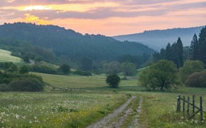 Picture road, greens, field, forest, summer, the sky, grass, clouds, trees, nature, fog, dawn, hills, glade, ...