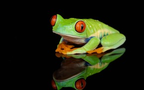 Picture reflection, the dark background, frog