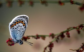 Picture butterfly, branch, flowers, bokeh