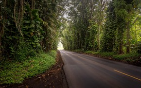 Picture road, forest, trees