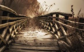 Picture autumn, bridge, nature