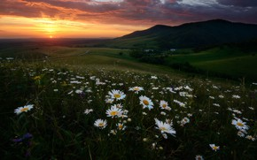 Picture field, summer, the sky, landscape, sunset, flowers, mountains, clouds, nature, hills, chamomile, meadow, Russia, flower …
