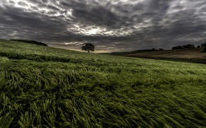 Picture field, the sky, tree, the evening