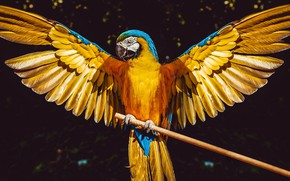 Picture the sun, background, bird, wings, feathers, parrot, Ara