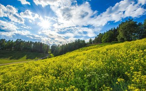 Picture summer, the sky, clouds, landscape, flowers, nature, beauty