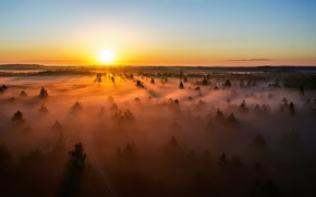 Picture Lithuania, sunset, misty, forest