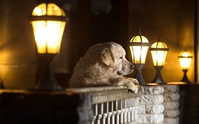 Picture dog, lights, dog, Andrei Ershov