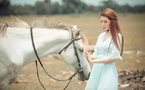 Picture field, white, face, girl, nature, pose, horse, horse, friendship, brown hair, weasel, Asian, white dress, …