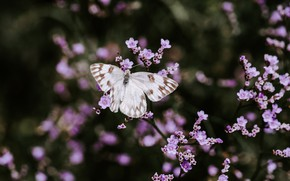 Picture branches, butterfly, flowering