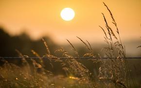 Picture grass, dawn, wire