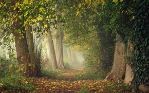 Wallpaper greens, autumn, forest, leaves, branches, fog, Park, thickets, branch, trunks, foliage, track, haze, alley, falling ...