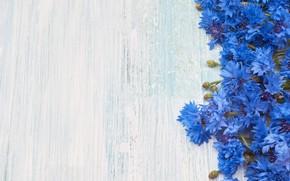 Picture flowers, bouquet, blue, Vasiliki, Olena Rudo