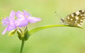 Picture summer, macro, flowers, green, background, butterfly, leaf, insect, pink, motley