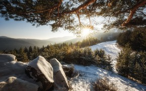 Picture winter, forest, the sun, rays, light, snow, mountains, branches, stones, hills, pine, needles, young, stones, …