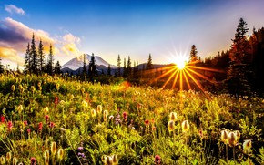 Picture the sun, rays, trees, landscape, flowers, mountains, nature, meadow, USA, grass, reserve, National Park, Mount …