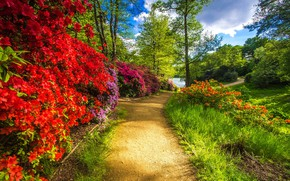 Picture greens, summer, grass, trees, flowers, branches, Park, shore, garden, track, red, bright, bright colors, flowering, …