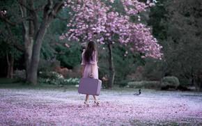 Picture girl, nature, Park, back, spring, brunette, suitcase, flowering
