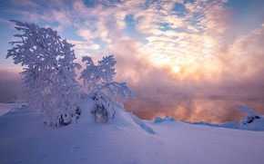 Picture winter, snow, tree, morning, frost, the snow, Russia, frosty morning, Pechora, Pechora reservoir, The Republic …