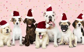 Picture dog, New Year, Christmas, puppy, happy, Santa, Christmas, puppy, dog, New Year, cute, Merry, santa ...