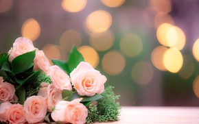 Picture background, roses, bouquet, pink, bokeh