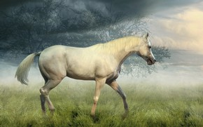Picture field, white, the sky, grass, look, clouds, trees, nature, fog, horse, collage, horse, treatment, morning, …