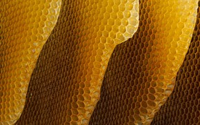 Picture cell, honey, bees