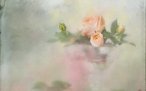 Picture glass, roses, blur, a bunch, vase