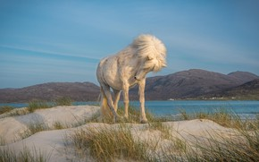 Picture sand, white, grass, mountains, nature, pose, river, horse, hills, shore, horse, dunes, mane, is, Iceland, …