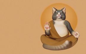Picture cat, the sun, art, monk, asana, Nirvana, Cat I'm a kitty cat, Alexandra Frantseva
