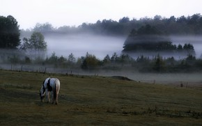Picture field, fog, horse